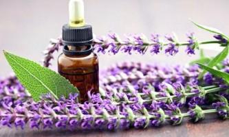 Шавлієве масло в складі масок для волосся: добірка рецептів