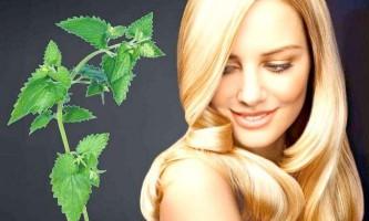 Зміцнювальний зілля: користь кропив`яних відварів і масок при випаданні волосся